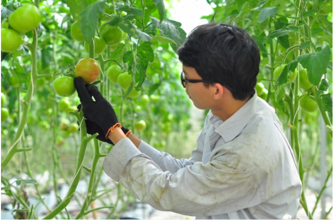 Nông nghiệp thông minh 4.0: Thực tiễn ở Lâm Đồng