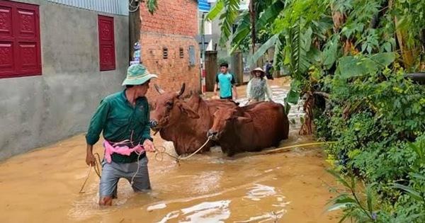 Nước sông dâng nhanh, người dân ở Quảng Nam tất bật chạy tránh lũ