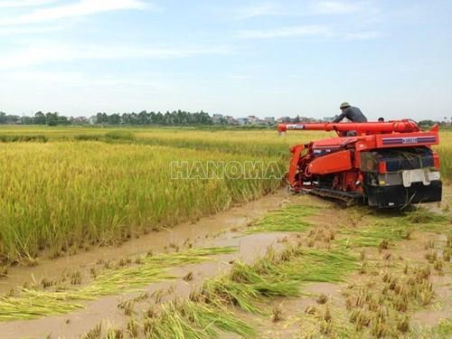 Máy gặt đập liên hợp KUBOTA R1-55
